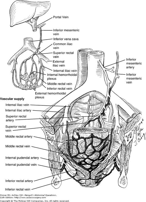 Ανατομία του εντέρου αιμάτωση - αιμορροΐδες